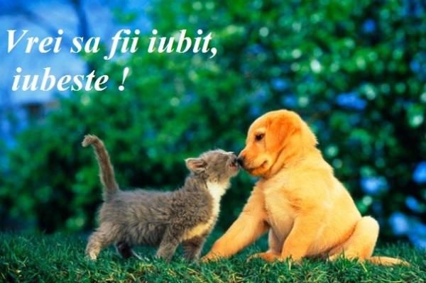 animale_companie