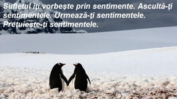 pinguini_indragostiti